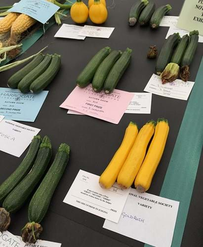 A selection of the courgettes entered, including a bright yellow Goldrush variety