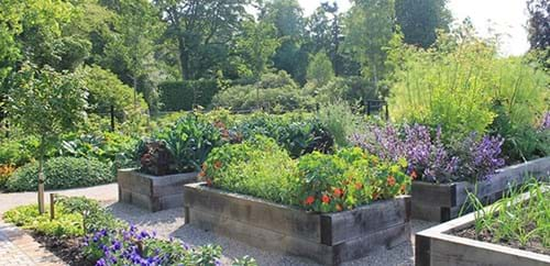 The flower beds in the Kitchen Garden in bloom