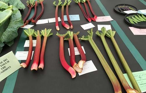 A selection of the rhubarb entered