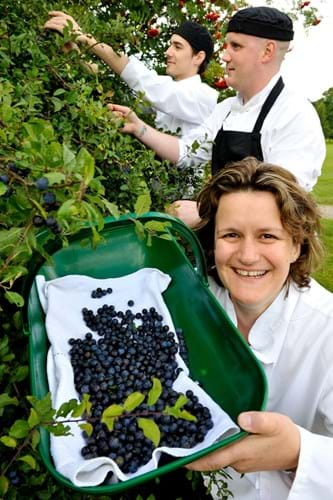Stephanie Moon picking sloe berries with two chefs