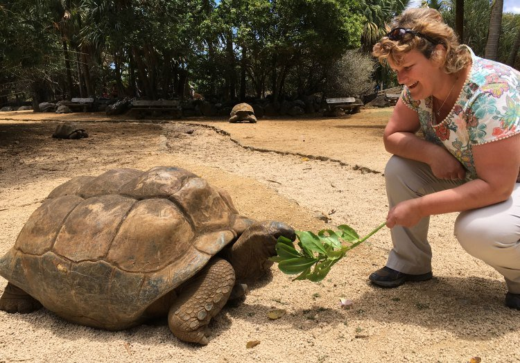 Steph crouches next to a giant turtle, offering it a leaf. There are two more turtles in the background.