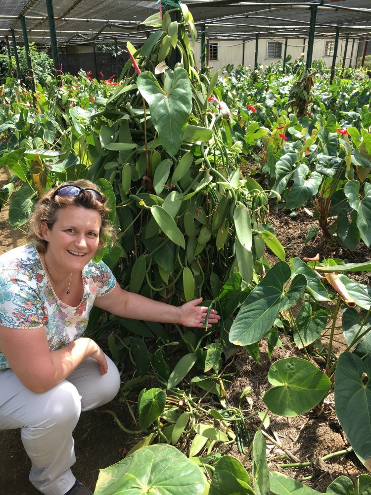Steph crouches beside a vanilla plant, with a green pod resting on the palm of her hand.
